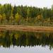 Torronsuo National Park - Murtosaari water reflection