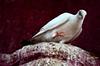 Hunter's grasp (Joy lens) Tags: hunter's grasp hunting bird old building