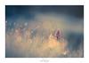Le marchand de rêve (Naska Photographie) Tags: naska photographie photo photographe p paysage proxy proxyphoto printemps macro macrophotographie macrophoto minimaliste minimalisme orchidée sauvage orchid matin soleil lumière light sun onirique onirisme art artistique artist dream reve fleur flower floral flare fleuri floraison flou couleur bokeh flowers fleurs