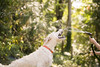 frodo-service-dog-in-training-6 (Little Earthling Photography) Tags: dog labradoodle water servicedog boy summer
