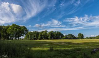 Ashridge Summer Clouds