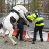 """horse wants to fuck the police <a style=""""margin-left:10px; font-size:0.8em;"""" href=""""http://www.flickr.com/photos/78655115@N05/36890354572/"""" target=""""_blank"""">@flickr</a>"""