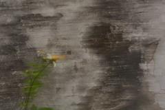 Flor (dbalandrano) Tags: abtracto flor abstract