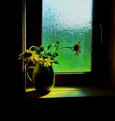A sunny greeting for you (peggyhr) Tags: peggyhr sunflowers jug windowsill dedication yellow light window green black textures glass dsc07530a bluebirdestates alberta canada thegalaxy thegalaxystars thelooklevel1red niceasitgets~level1 niceasitgets~level2 visionaryartsgallerylevel1 groupecharliel1 infinitexposurel2 clearvisionl1 groupecharliel2 groupecharliel3