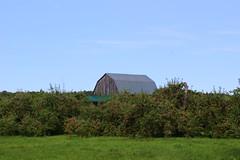 At the orchard (pegase1972) Tags: orchard pommier apple pomme arbre tree barn qc québec quebec canada montérégie monteregie