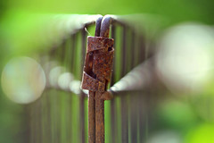 Rust (lfeng1014) Tags: hmm rust macromondays theme metalwirefence macro macrophotography canon5dmarkiii 100mmf28lmacroisusm closeup bokeh dof depthoffield rusty lifeng