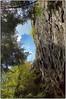 Looking Up (Steve4343) Tags: nikon d70 d70s backbone rock tennessee damascus virginia shady valley cliff rocks green blue clouds sky trees steve4343