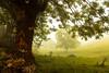 fog (www.infografiagijon.es) Tags: wwwinfografiagijones infografia gijon astur asturias asturies xixon hernancad canon eos5d markii nature naturaleza montaña mountain otoño campo setas mushroom bosque dark oscuridad caso caleao