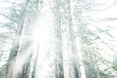 Blinding Light (sampost) Tags: forest light rays overexposed justforfun