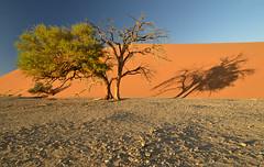 tree's shade (clasch) Tags: africa nikkor nikon d7000 landscape nature dune 45 desert sand orange view sesriem sossusvlei national park 1224 namibia tree namib naukluft blue