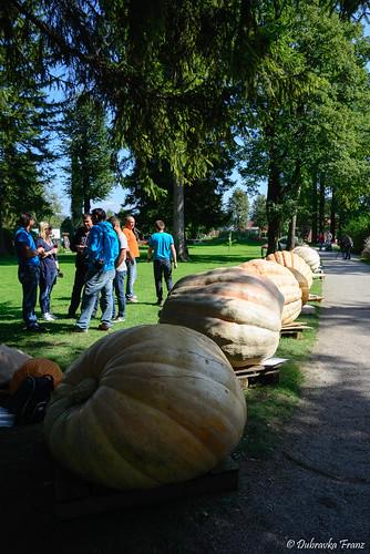 pumpkin exhibition in Mozirski gaj