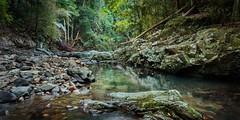Stillness of a rainforest pool (pbaddz) Tags: australia currumbincreek creek rocks rainforest goldcoast queensland mtcougal springbrooknationalpark worldheritagre