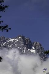 Zugspitze (carolienvanhilten) Tags: garmisch partenkirchen kreuzeckbahn mountains bavaria bayern beieren bergen deutschland germany duitsland cablecars kabelbaan seilbahn butterfly flowers