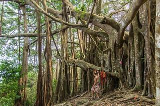 ramkhamhaeng national park - thailande 24