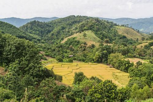 wiang kaen district - thailande 70