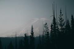 #1048 (-HannahKemp) Tags: mountrainier smoky washington blue forest landscape nature