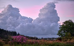 Early morning, Porshaug - Norway (Vest der ute) Tags: xt2 norway rogaland haugesund clouds sky flowers grass earlymorning trees houses fav25 fav200