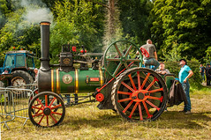 From the Age of Steam (RonnieLMills) Tags: steam traction engine agriculture farming history vintage show roller industrial heritage county down molly