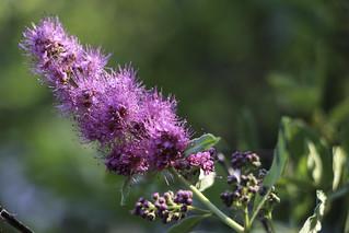 Thompson Lake wildflowers