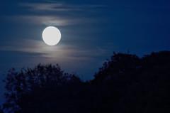 moon (julia schu) Tags: friedrichshagen k30 köpenick berlin night nacht moon mond mügge müggelsee