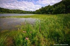 Wetland Grasses (mswan777) Tags: reed wildflower seascape outdoor nature scenic michigan water lake wetland nikon d5100 sigma 1020mm lily pad summer shore sky cloud kalamazoo