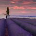 La Lumière du Soir Provençal - (numero deux)