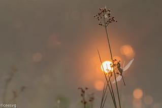 In de zonsopkomst