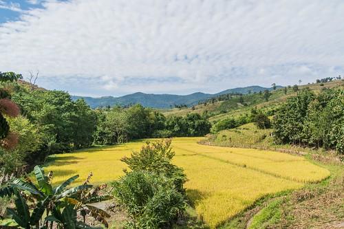 wiang kaen district - thailande 75