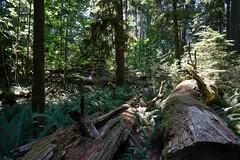 Vancouver-Island-3093 (alans1948) Tags: vancouverisland britishcolumbiacanada