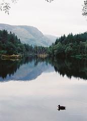 CNV00027 (SB_McAllister) Tags: fujica fujinon stx1 glencoe scotland filmisntdead lomography film 50mm