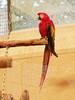 Papegaai (ericderedelijkheid) Tags: ouwehandsdierenpark rhenen dierentuin zoo netherlands