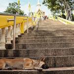 Wat Khao Takiap thumbnail