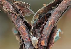 Rusty gate (christina.marsh25) Tags: gate iron wroughtiron blue rust macro macromondays