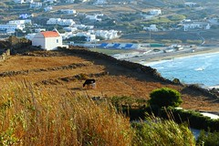 #mykonos #greece #Μύκονος #米克諾斯 #希臘 (Mg Lin) Tags: