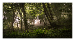 In for a penny (Khun Jeremy) Tags: sony trees lynmouth devon green vegan