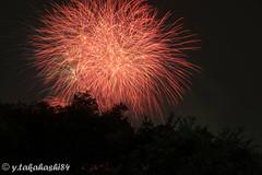 _IMG5942.jpg (y.takahashi84) Tags: hanabi fireworks 花火 さいたま urawa 浦和 東浦和 saitama 日本の夏 summer japan