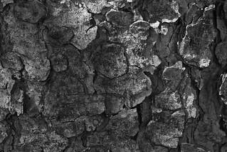 The tree bark #1