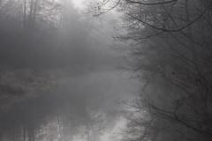 when grey is most beautiful color (Mindaugas Buivydas) Tags: lietuva lithuania color winter december river fog mist morning calm mood moody šyša morninglight sadnature forest tree trees favoriteplaces home mindaugasbuivydas