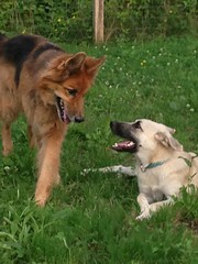 IMG_0298 (citydogs4streetdogs) Tags: tansy adopted