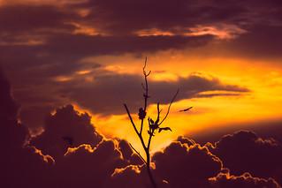 Nest in the sky #evening #lights #birds #nest #friends #love #colour #tone #saturation #vibrance #peace #sunset #nikon #camera #dslr #photography #tamron #d7100 #tamron70-300 #nikkor200-500 #nikonusa #tree #lone #silhoute #fly #cloud #dense #wind #nature