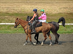 Pals (knightbefore_99) Tags: horse cheval bc day pals track bet fast speed hastings racecourse vancouver eastvan thoroughbred cool awesome best fun