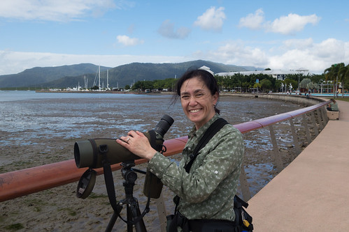Birding the Cairns Foreshore