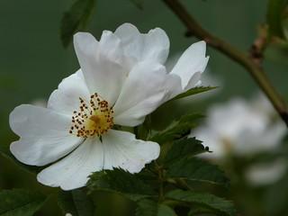 bellezza e delicatezza spontanee