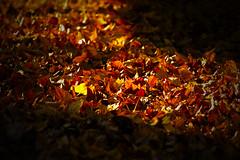 (Weils Piuk) Tags: autumn otoño hojas leaves yellow orange amarillo naranja minimalismo minimalist light color canon t5i duba mendoza argentina potrerillos