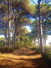 iph501 (gzammarchi) Tags: italia paesaggio natura camminata itinerario ravenna marinaromea puntealberete bosco pineta strada sterrato