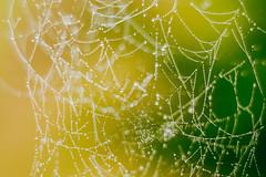 Spider Web #223/365
