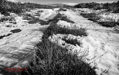 Up Snow Road (Anneka Barritt Photography NZ) Tags: finished landscapes noedit ruapehu tongariro baldy downlow mountain nationalpark snow tripod tussock