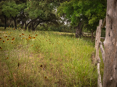 Happy Fence Friday (Jims_photos) Tags: wimberleytexas wildflowers texas trees unitedstates outdoor outside oldfence adobelightroom adobephotoshop shadows daytime daytimefence fencefriday flowers happyfencefriday jimallen jimsphotos jimsphotoswimberleytexas lightroom landscape nopeople