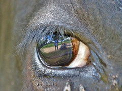 I can see you..... (stellagrimsdale) Tags: eye cow reflections reflection paulwright lens eyescape flyes eyelashes