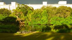 A Calm Afternoon by the Creek (soniaadammurray - Off) Tags: digitalphotography creek trees grass dock shadows reflections school afternoon calm nature hss sliderssunday green sunlight